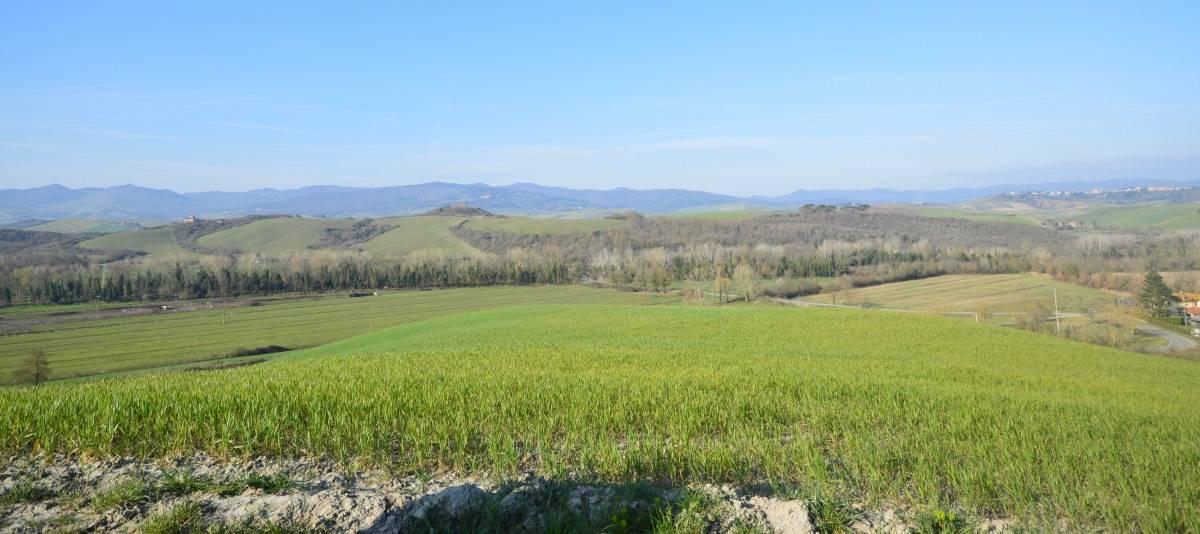 Vendita Fienile Campagna Pisana RIF:2076 - Agenzia Immobiliare Betti Poggibonsi Siena Toscana (2)