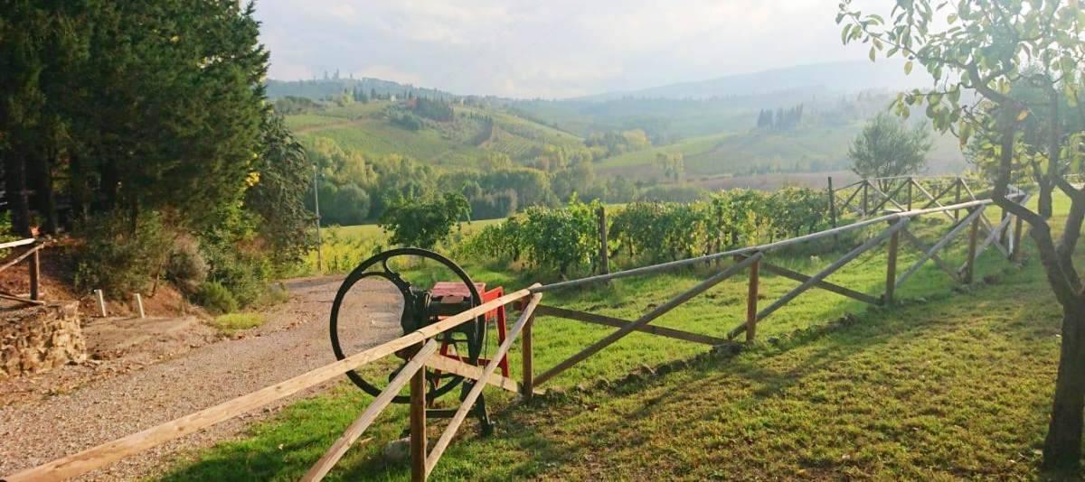 Vendita Azienda Agricola Campagna Senese RIF:2178 - Agenzia Immobiliare Betti Poggibonsi Siena Toscana (8)